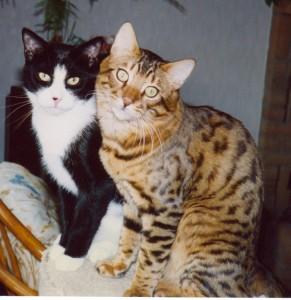 Hoss & Figaro