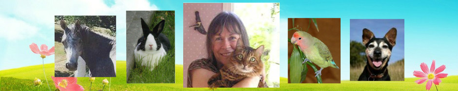 To Our Animals' Wellness – Sue's Blog