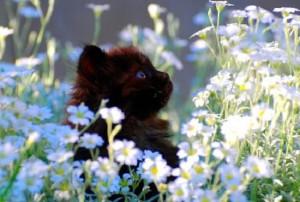 blackkitty-whiteflowers2